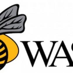 Avant Wasps (Challenge Cup 2ème journée)